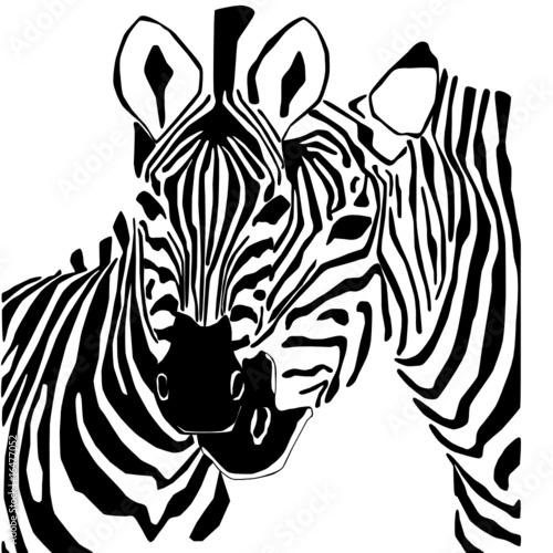 Black And White Zebra Portrait