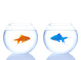 alien goldfish and normal goldfish poster