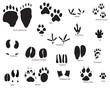 animal traces set