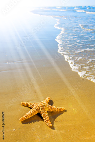 Sea Star or Starfish on a beautiful beach