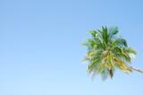 Vibrant coconut palm tree poster