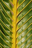 Vibrant coconut palm tree detail/background poster