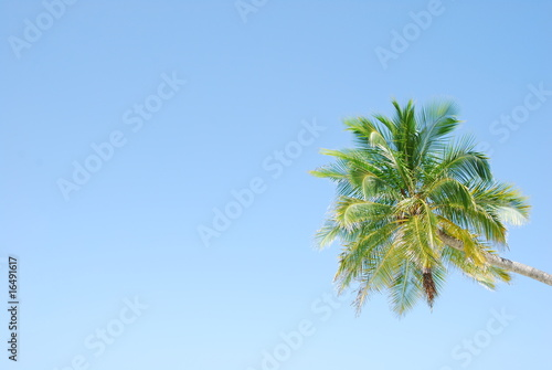 Vibrant coconut palm tree