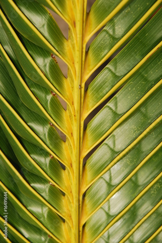 Vibrant coconut palm tree detail/background
