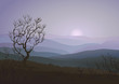 Lonely tree over foggy morning rolling landscape