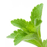 stevia Rebaudiana - édulcorant naturel, alternative au sucre