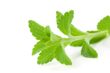 stevia Rebaudiana - édulcorant naturel, alternative au sucre