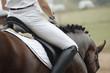 Woman on a horseback - 16504669