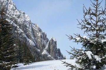 Tatra mountains during winter - trees and rocks