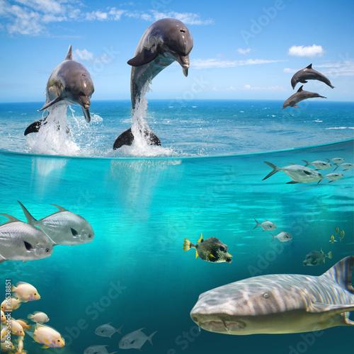 Fototapete kinderzimmer unterwasserwelt  Fototapete Meer - Animals - Meeressäuger - Unterwasser - Pixteria