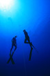 Freedivers - 16553255
