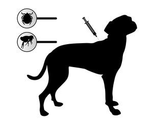 Hund bekommt Impfung gegen Flöhe und Zecken