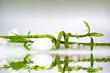 Bambus mit weißen Steinen und Wasserspiegelung