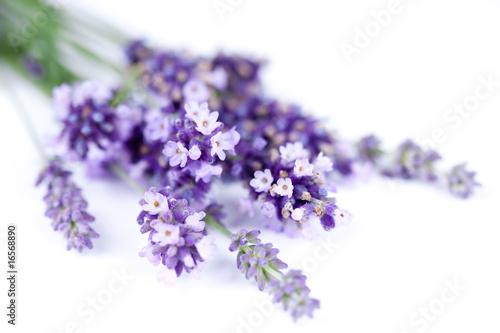 Foto op Aluminium Lavendel Fleurs de lavande