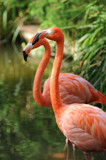 Fototapete Afrika - Natur - Vögel