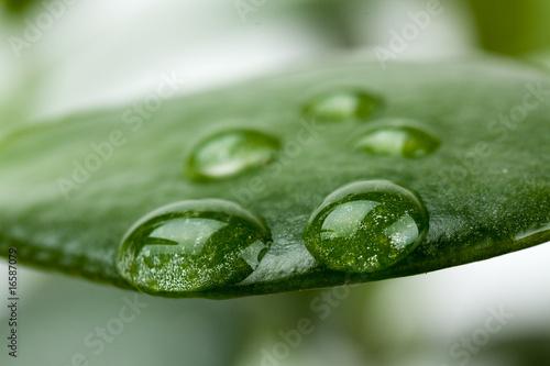 In de dag Cactus Blatt in der freien Natur,Makro-mit Tropfen
