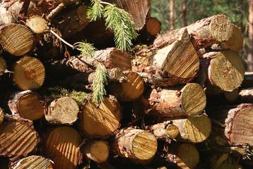 Wood Renewable Energy