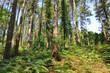 bosque en el Pais Vasco