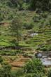 Terrassenförmige Teeanlagen im Hochland von Sri Lanka