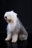 Fluffi Dog poster