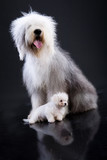Two Fluffi Dogs poster
