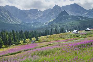 góry, Tatry, Hala Gąsienicowa