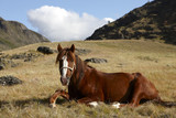 Horse in Altai mountains
