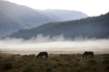 Morning in Altai mountains