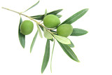 Fototapety Olive branch, isolated