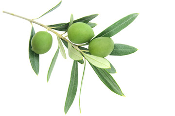 Olive branch, isolated