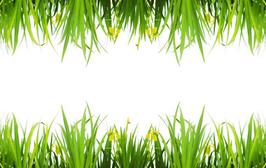 Grass (sample text )
