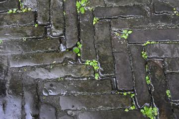 Jeunes pousses d'herbe sur un sol pavé