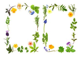 Herb and Flower Leaf Borders