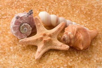 Starfish and three seashell on golden background