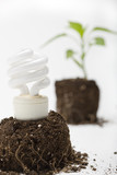 A young plant sprouts up through an energy efficient lamp poster