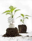 A green plant grows up through an energy efficient light bulb poster