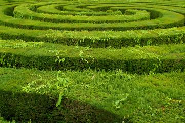 maze hedge circled towards the center