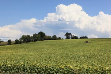 abri et champ de tournesols