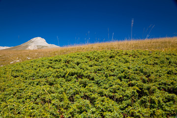 erba di montagna