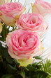 Bouquet of tender pink roses on white