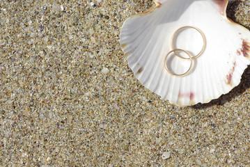 Two wedding rings in seashell