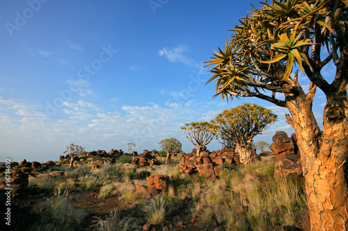 canvas print picture Quiver tree landscape, Namibia, southern Africa
