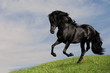 black horse stallion run gallop om the meadow, collage paint