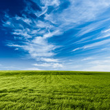 Fototapety blue skies above the green field