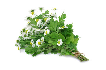 Feverfew (medicinal herb)
