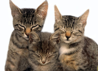 Three sitting sleeping cats