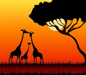 Silhouettes of giraffes against a decline in a safari