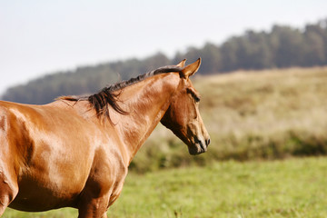 young horse on field