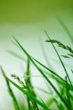 Green Harmony poster