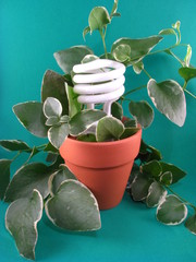 Eco-Friendly CFL Lightbulb